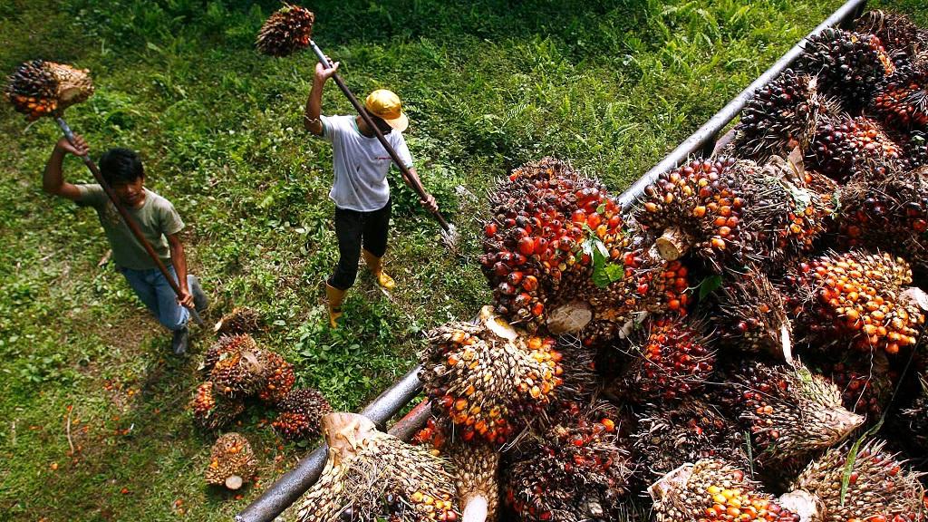 Palm Oil, Apa Kejadah Ni?